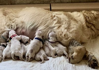 cig-cozy-gallery-3115XZv-NWBB-Belle-and-her-babies-xl
