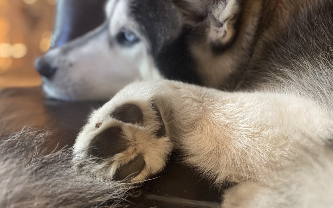 Paw Health and Maintenance