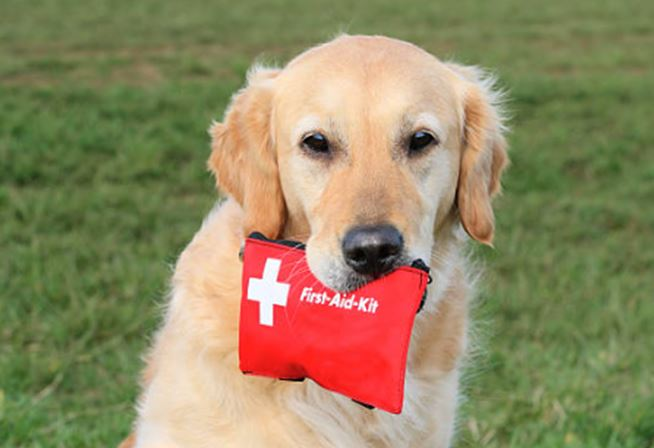 Canine First Aid