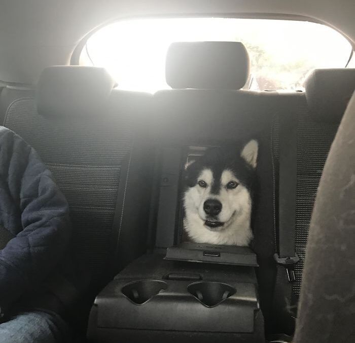 The Greenhouse Effect: Dogs In Cars